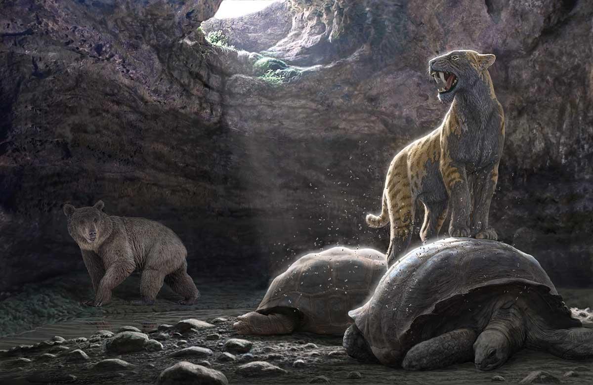 Reconstrucción del interior de la cavidad correspondiente al yacimiento de Batallones 3 hace unos nueve millones de años. Ilustración: Mauricio Antón.
