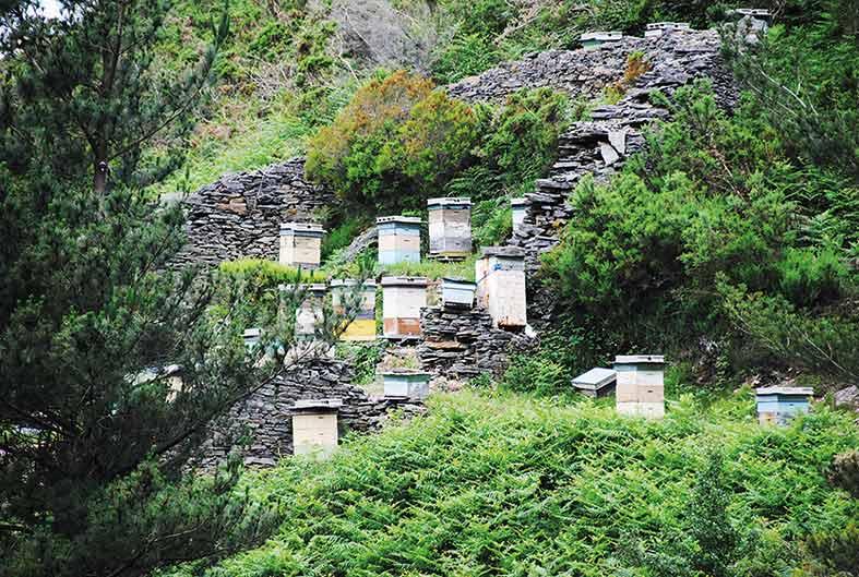 Colmenas de abejas en el interior de un cortín de Os Teixois, a solo cuatro kilómetros de distancia de la villa de Taramundi.